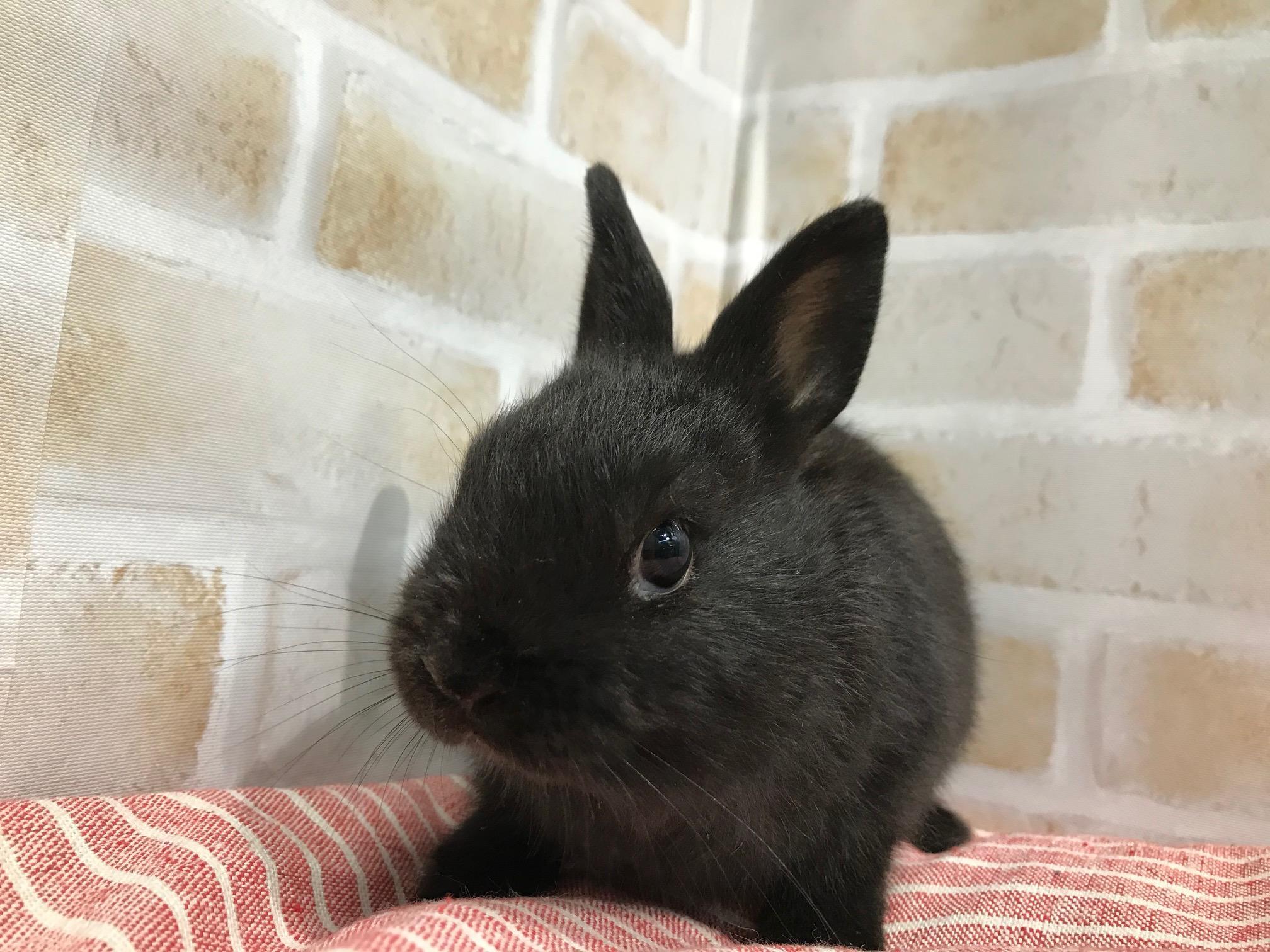 可愛い子ウサギとジリスベビー入荷しました!