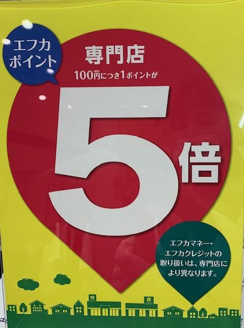 ☆明日、5/16(日)はエフカ5倍☆